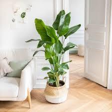 die perfekten zimmerpflanzen für dein wohnzimmer bergamotte