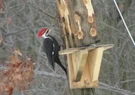 Build a Suet Bird Feeder from a Log