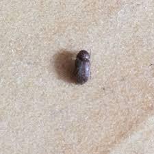 kleine tiere im schlafzimmer was ist das käfer
