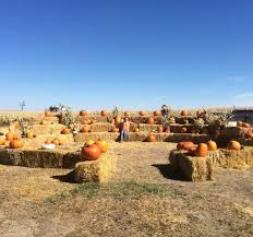 Pumpkin Patches In Colorado Springs 2014 by 7 Best Pumpkin Patches In Montana To Visit In 2016