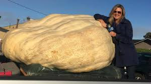 Half Moon Bay Pumpkin Festival Biggest Pumpkin by Annual World Championship Pumpkin Weigh Off Champion Weighed 1 969