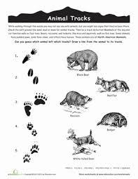 Third Grade Science Worksheets Animal Tracks