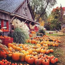 Pumpkin Patch Toledo Ohio by Cider Mill In Rochester Michigan Hiking Pinterest Michigan