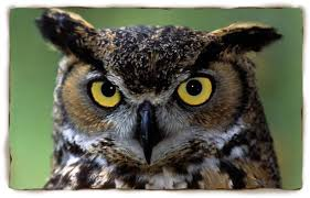 Owl Photography Event Thursday Evening Under The Full Moon