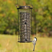 Fall Bird Feeding Tips Marketplace Audubon Mason Bees Backyard Bird Shop Sibleys Birds Of The Midatlantic Southcentral States Amazoncom In Garden Wall Calendar 2018 Home Page The House Ny 97 Best Michaels Craft Store Coupons Discounts Images On Wild Fersbirdseed Blendsnature 25 Unique Birds Unlimited Ideas Pinterest Stained Glass Patterns 01557013429 Predator Guide Protect Your Yard Little Book Songs Andrea Pnington Caz