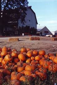 Pumpkin Patch Medford Oregon by Whites Country Farm Harvest Festival What To Do In Southern