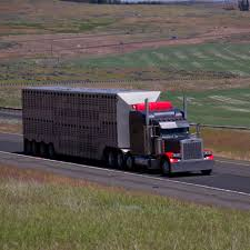 100 Mississippi Trucking Association Safety Exemptions For Livestock Haulers Raise Concerns For Others On