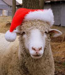 Spirit Halloween Blossom Hill San Jose by Where Else Would You Find Sheep Wearing Santa Hats Nowhere Else