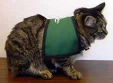 service cats itchmo news for dogs cats archive cats as service animals