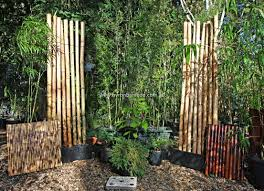 planting bamboo in a pot bamboo for planters pots byron bay bamboo planters pots others