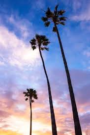 Palm Trees In California Beach During Sunset Stock Photo