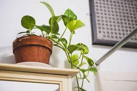 gesunde zimmerpflanzen für jeden raum die passende pflanze