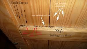 Bed Frames Wonderful Bugs Skin Shed Can Live Metal Frames