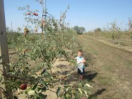 Pumpkin Patch Near Pensacola Fl by Family Friendly Outdoor Activities In Omaha Military Town Advisor
