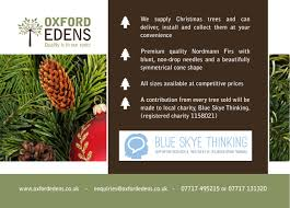 Nordmann Fir Christmas Trees Wholesale by Christmas Tree Service Oxford Edens