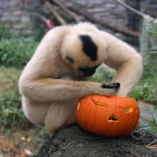 Roger Williams Pumpkin Festival 2017 by Halloween New England