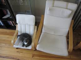 Ikea Poang Chair Cover by Bought My Cat A Chair In Ikea Aww