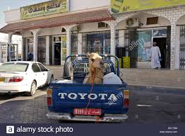 Camel In Pickup Truck In Front Of Shops, Sinaw, Oman Stock Photo ... Medium Duty Semi Truck Service Quality Car Repair Honda Wwwvancyclecom Graphics Custom Finishes Heavy Commercial Collision Centers Body Repair Walnut Creek Mobile Diesel Medic And Luxury Shops In San Antonio 7th And Pattison Shop Truck Pulling New Rat Rod Project Trucks Pinterest Grave Digger Monster Tour Behind The Scenes Youtube Ram Robert Loehr Cdjrf Cartersville Ga My Bass Pro Pink Camo Camel In Pickup Front Of Shops Sinaw Oman Stock Photo