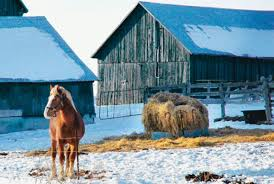 Get Your Horse And Barn Ready For The Winter Season - Expert ... Guide To 4 Favorite Spots For Springtime Salads In San Francisco Amazoncom Barn Dad Nutrition Fiberdx Cream Supplement Natural Day 79 80 Counting Calories No Turning Back Blue Gourmet At 2105 Chestnut St Steiner Kare11com New Bowls The Mn State Fair Minnesota Foods 2016 Wedding Event Venue Builders Dc Menu The Compact Barnstables Minecraft Tutorial Album On Imgur