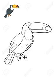 Coloring Book For Children Toucan Stock Photo Picture And Royalty