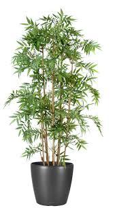 entretien des bambous en pot bambous artificiel vente d arbres et de plantes artificiels pas