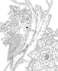 Backyard Animals And Nature Coloring Books Free Pages