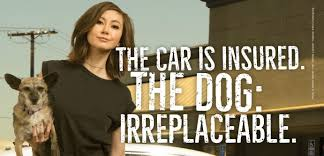 Roxy Hunter And The Horrific Halloween Online by Kimiko Glenn Protect The Dog First And Foremost Peta