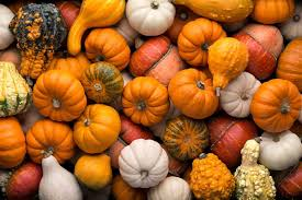 Pumpkin Festival Cleveland Ohio by Pumpkin Festivals 2018 2019 Find Pumpkin Events Everfest