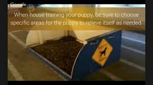 Dog Urine Wood Floors Get Smell Out by How To Get Dog Smell Out Of Carpet Youtube