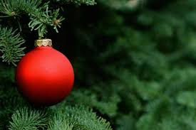 Are Christmas Trees Poisonous To Dogs Uk by Christmas Tree Syndrome U0027 Not As Pleasant As It Sounds Time Com