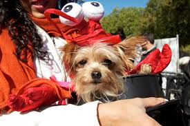 Tompkins Square Halloween Dog Parade by Gallery Our Favorite Food Costumes At The Tompkins Square