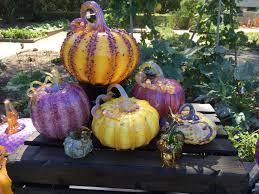 Best Pumpkin Patch Torrance by 100 Pumpkin Patch Torrance Ca Shawn U0027s Pumpkin Patch