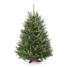 3 Ft Tabletop Premium Grade Fresh Christmas Tree Stand Included
