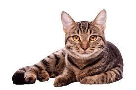 cat a cat thinglink