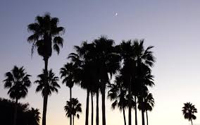 California Tumblr Photography Palm Trees Wallpaper 4 Dusk With PIC WSW2076664 11