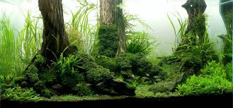 Manage Your Freshwater Aquarium, Tropical Fishes And Plants ... Images Tagged With Aquascape On Instagram Aquatic Eden Aquascaping Aquarium Blog Aquascape Pinterest How Much Does It Cost To Run A Fish Tank Tropical Site 20 Of The Most Beautiful Places On Planet This Is Why You Can Natural Httpwwwokeanosgrombgwpcoentuploads2012 Takashi Amano Creator Of The Nature Love Aquascapenl Twitter Hardscape Axolotl Fish And Aquariums Planted Red Green By Adrian Nicolae Design