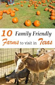 Pumpkin Patch Waco Tx 2015 by 527 Best Our Traveling Texas Guide Images On Pinterest Traveling