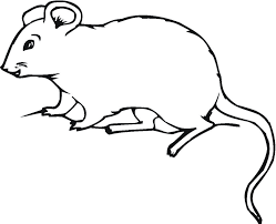 Cute Mouse Coloring Pages Tags 3 Benefits Adult Therapy Turtle