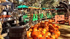 Pumpkin Patch College Station by Plan A Day Out Blog Promoting Family Time In Orange County By