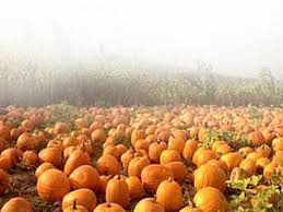Piedmont Service Center Pumpkin Patch by Halloween Fun Town By Town To Keep You Busy San Leandro Ca Patch