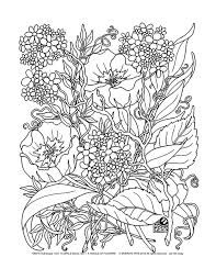 Free Coloring Page Adult Savage Flowers To Color