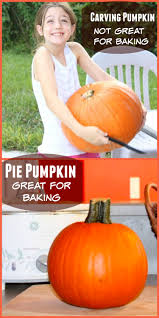 Bake Pumpkin For Pies by Can You Cook A Halloween Pumpkin Jack O Lantern The Happy