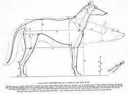 FileStudies In The Art Anatomy Of Animals Microform