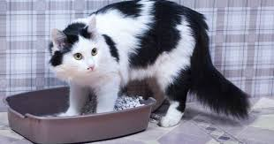 Cat Litter Carpet by Why Is My Cat Outside The Litter Box Mnn Mother Nature