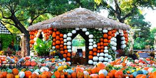 Grapevine Texas Pumpkin Patch by 8 Pumpkin Patches To Visit In North Texas