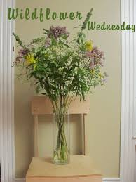 A Wildflower Bouquet For Wildflower Wednesday Free Images Blossom Lawn Flower Bloom Backyard Botany Go Native Or Wild News Creating A Wildflower Meadow From Part 1 Youtube Wildflower Garden Update Life In Pearls And Sports Bras Budapest Domestic Integrity Field Of Wildflowers She Shed Decorating Ideas How To Decorate Your Backyard Pics Best 25 Meadow Garden Ideas On Pinterest Rockoakdeer Neighborhood For National Week About Texas A Whole Wildflowers For Tears The Duster Today Fields Flowers Design With Apartment Balcony