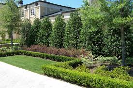 Backyard Evergreen Trees - Garden Evergreen Trees Gallery   Xtend ... Garden Design With Backyard Landscaping Trees Backyard Fruit Trees In New Orleans Summer Green Thumb Images With Pnic Park Area Woods Table Stock Photo 32 Brilliant Tree Ideas Landscaping Waterfall Pond Stock Photo For The Ipirations Shejunks Backyards Terrific 31 Good Evergreen Splendid Grass Scenic Touch Forest Monochrome Sumrtime Decorating Bird Bath Fountain And Lattice Large And Beautiful Photos To Select Best For