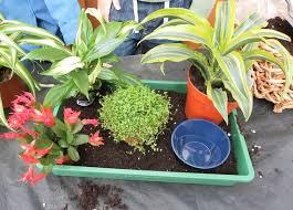 7 tipps für pflanzen im kinderzimmer ratgeberzentrale