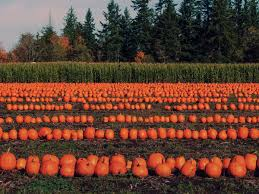 Snohomish Pumpkin Patch by The Best Pumpkin Patches Near Seattle Mapped