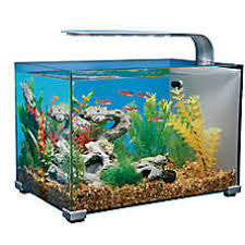 fish tanks aquariums petsmart